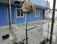 Még mindíg sok a kutyaevő Jiangsu tartományban