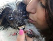 Megválasztották a világ legcsúnyább kutyusát