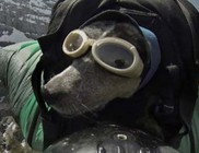 Bázisugró kutya - videóval