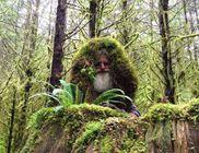 25 éve él a civilizációtól távol, egy őserdőben a 62 éves férfi