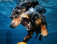 Víz alatti kutyaélet - fotók a kutyastrandról