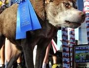 Íme Quasi Modo, a világ legrondább kutyája