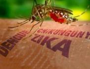 Súlyos rendellenességeket okoz a zikaláz