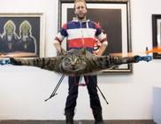Macskából, patkányból Quadcopter
