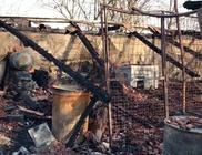 Leégett egy állatmenhely, 60 kutya pusztult el a tűzben