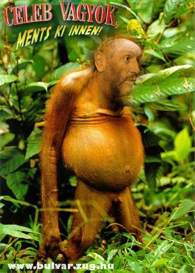 Az evolúció maradványa
