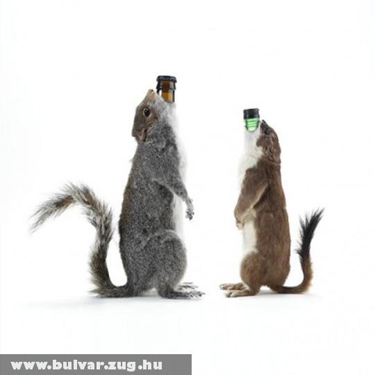 Sõr a mókusból
