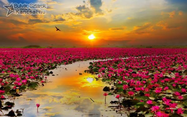 Virágok mindenhol