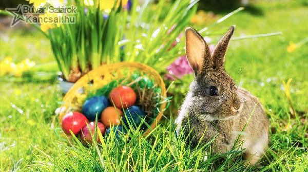 Húsvéti nyuszi, húsvéti tojás