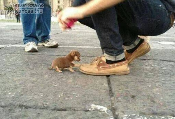 Cuki kutyus