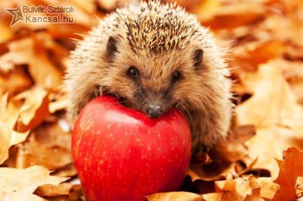 Süni őszi etetése