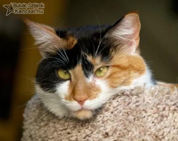 Macska pulóver