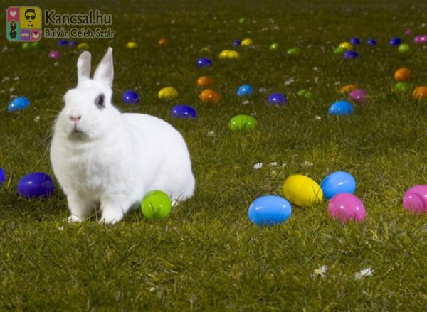 Húsvét, nyuszi, tojás