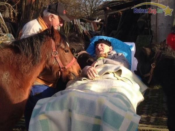 A haldokló bácsi utolsó kívánsága, hogy elbúcsúzhasson póni lovaitól