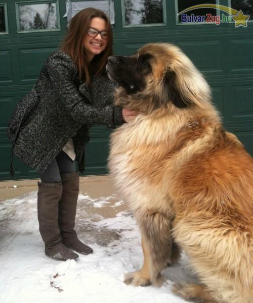 A világ legnagyobb kutyusa?!