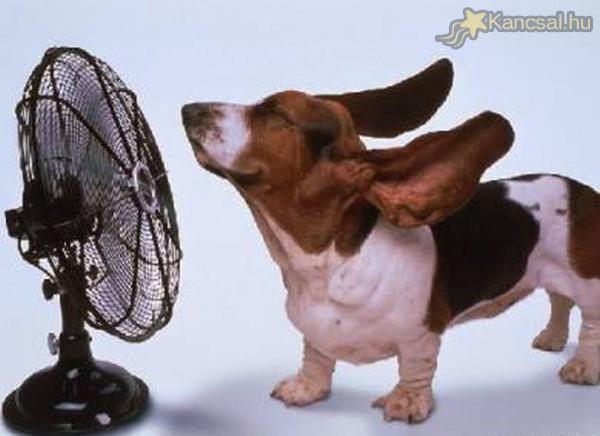 Kutya melegben ventilátorozz!