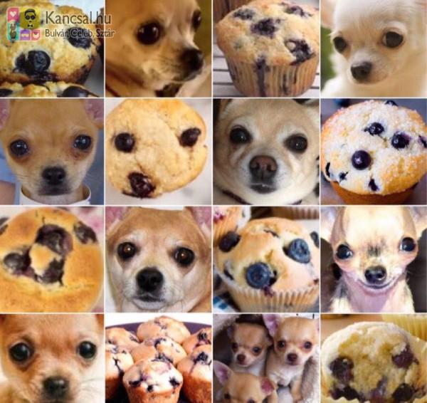 Kutya muffin :)
