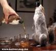 Egy kortyot a mókusból?