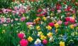 Tavaszi virágos rét
