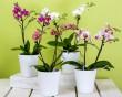 Gyönyörű orchideák