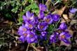 Tavaszi virág