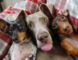 Boldog kutyusok