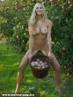 Almát szedõ szöszi