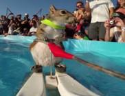 Vízisíző mókus - videó!