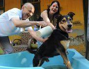 Szeretetet kapnak az kutyustól a pótgazdik